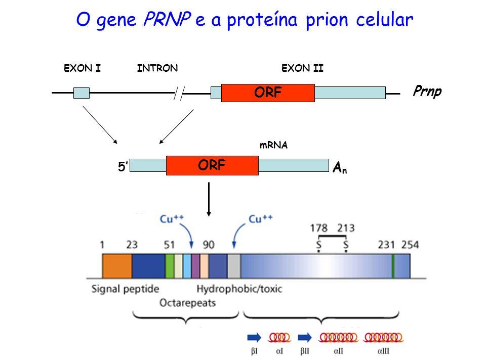 O gene PRNP e a proteína prion celular