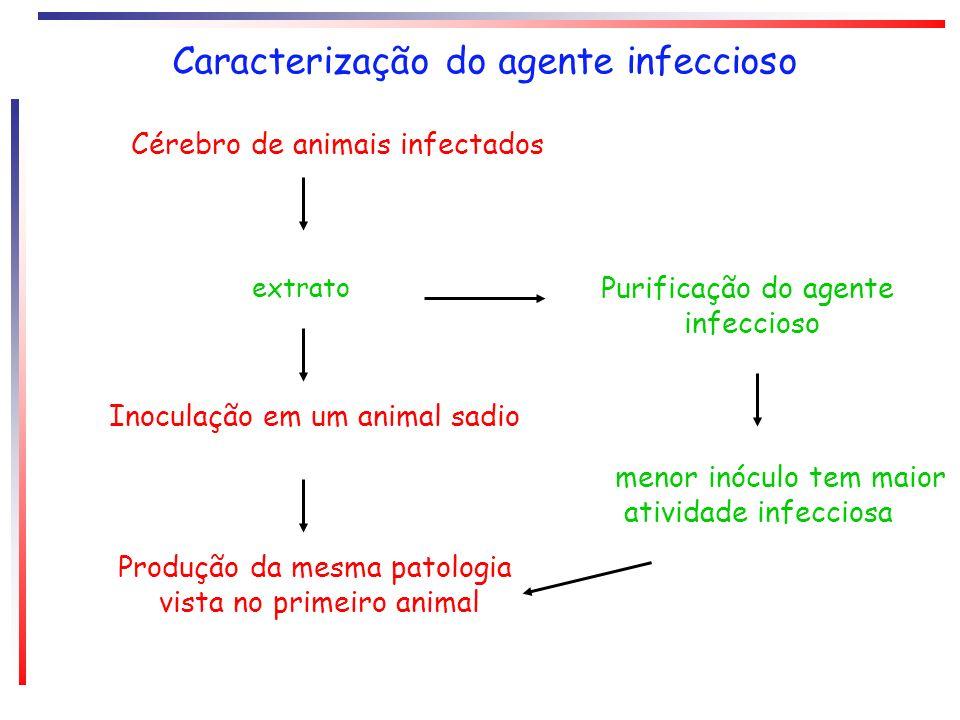 Caracterização do agente infeccioso