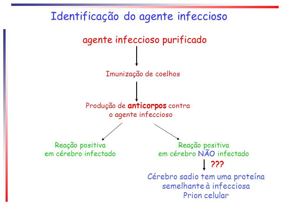 Identificação do agente infeccioso