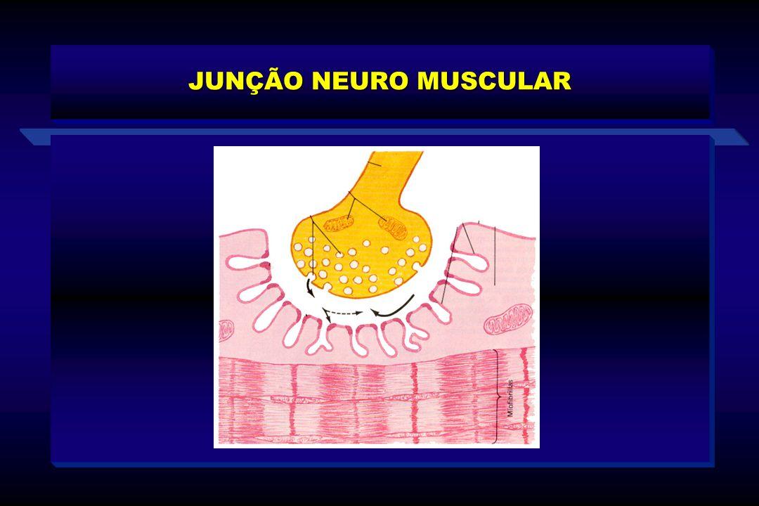 JUNÇÃO NEURO MUSCULAR