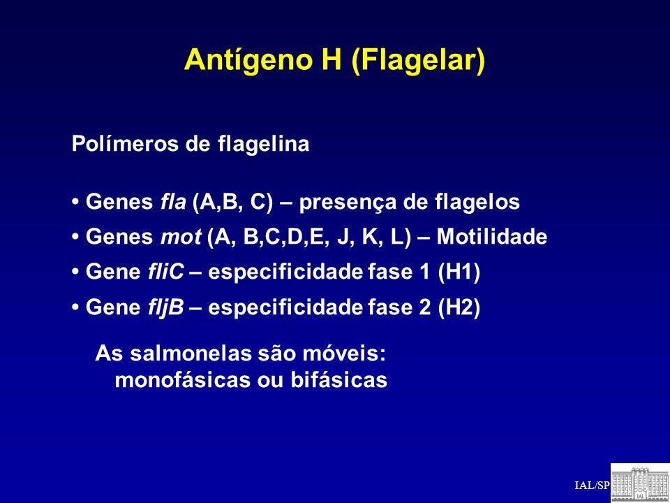 Antígeno H (Flagelar) Polímeros de flagelina