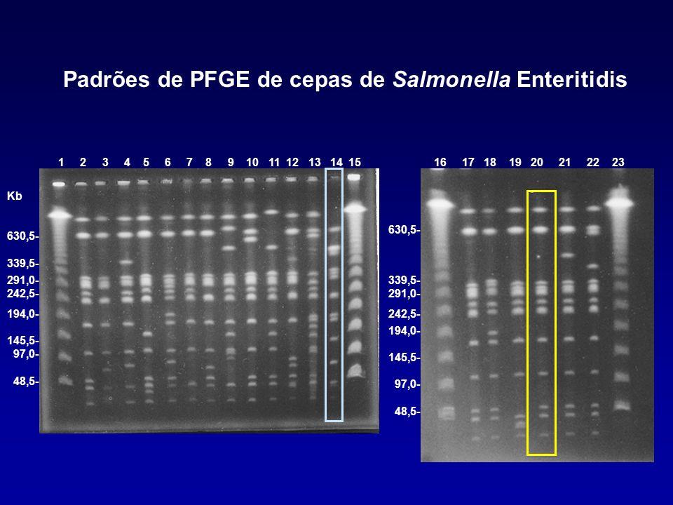 Padrões de PFGE de cepas de Salmonella Enteritidis