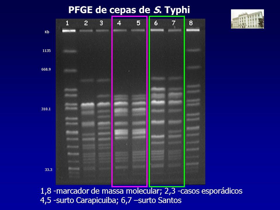 PFGE de cepas de S. Typhi Kb. 1135. 668.9. 310.1. 33.3. 1,8 -marcador de massa molecular; 2,3 -casos esporádicos.