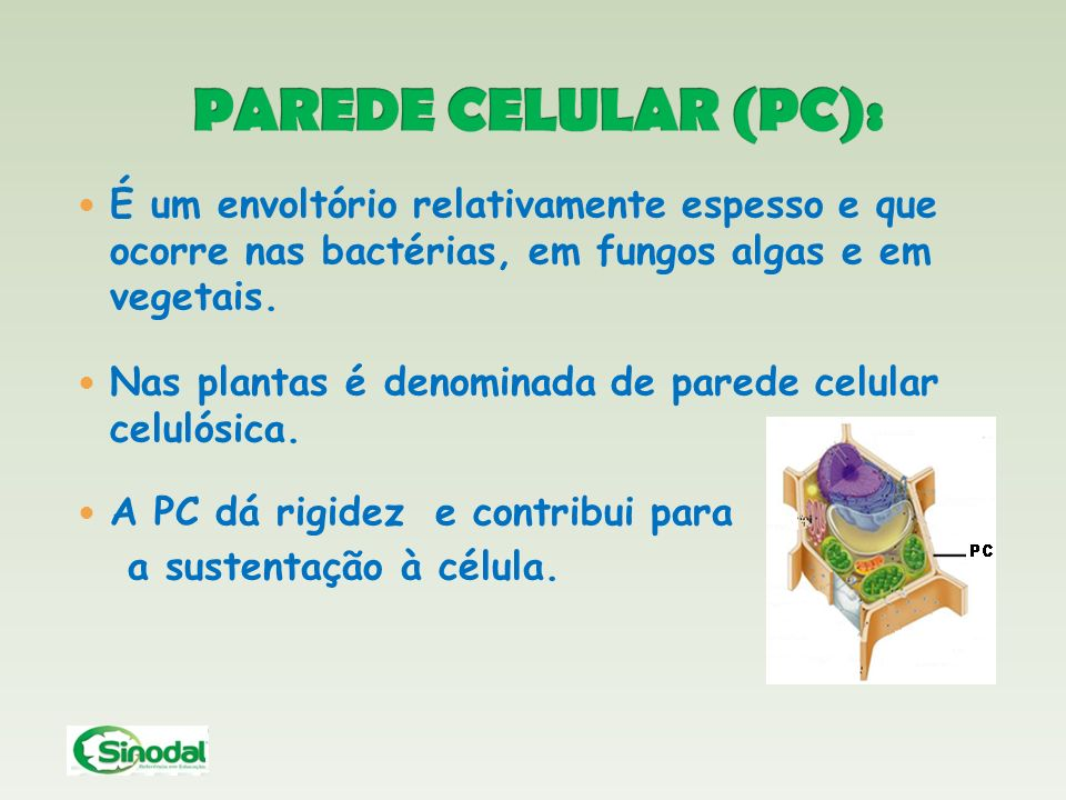 PAREDE CELULAR (PC): É um envoltório relativamente espesso e que ocorre nas bactérias, em fungos algas e em vegetais.