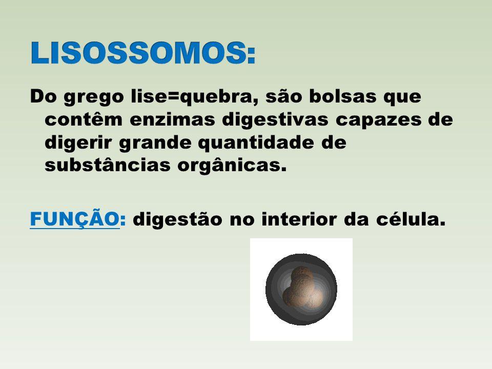 LISOSSOMOS: