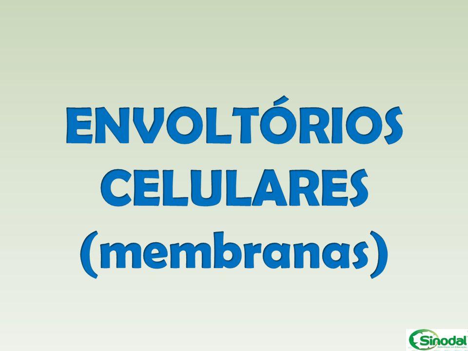 ENVOLTÓRIOS CELULARES (membranas)