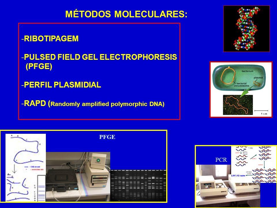 MÉTODOS MOLECULARES: RIBOTIPAGEM PULSED FIELD GEL ELECTROPHORESIS