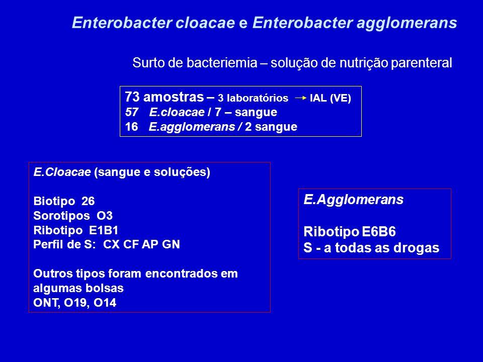 Enterobacter cloacae e Enterobacter agglomerans