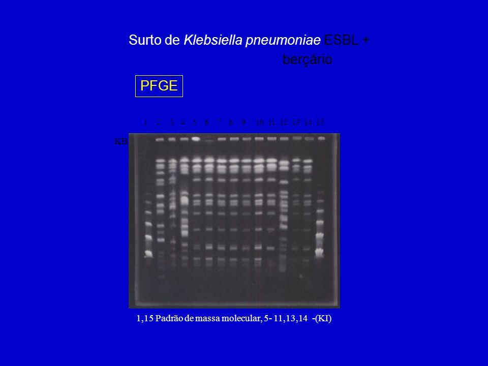 Surto de Klebsiella pneumoniae ESBL + berçário