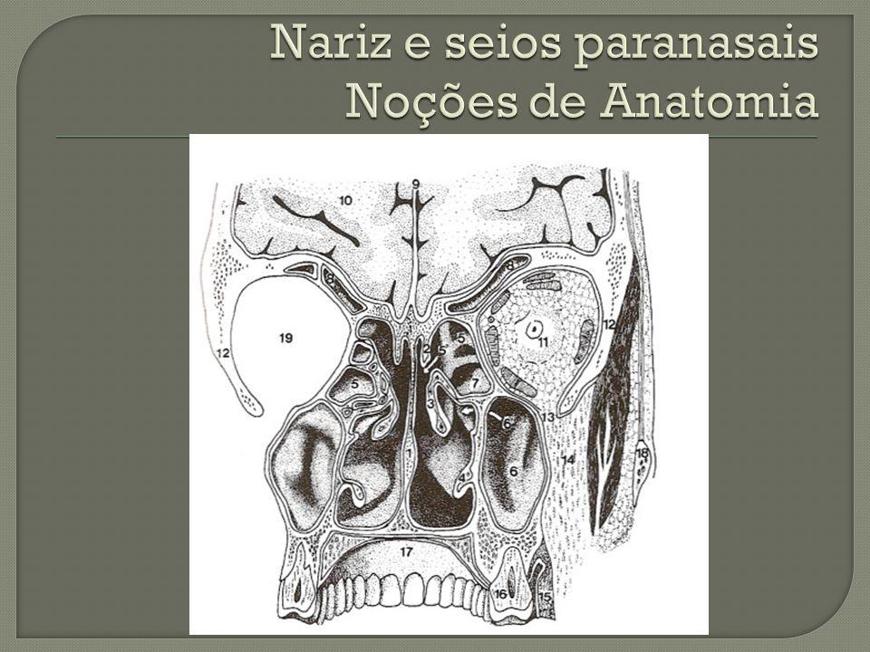Contemporáneo Diagrama De La Anatomía Alces Friso - Anatomía de Las ...
