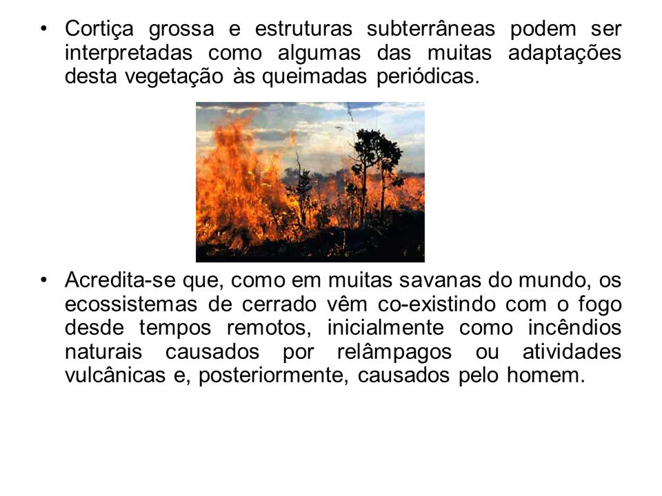 Cortiça grossa e estruturas subterrâneas podem ser interpretadas como algumas das muitas adaptações desta vegetação às queimadas periódicas.
