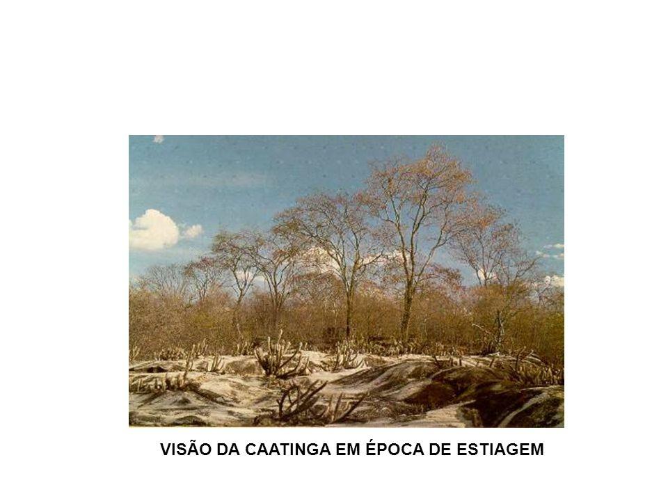 VISÃO DA CAATINGA EM ÉPOCA DE ESTIAGEM