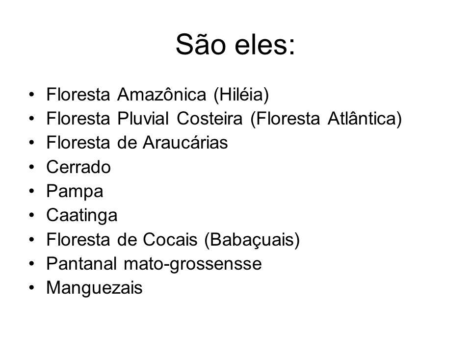 São eles: Floresta Amazônica (Hiléia)