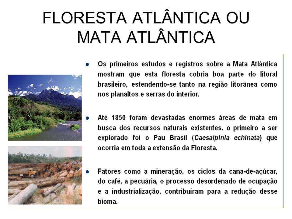 FLORESTA ATLÂNTICA OU MATA ATLÂNTICA