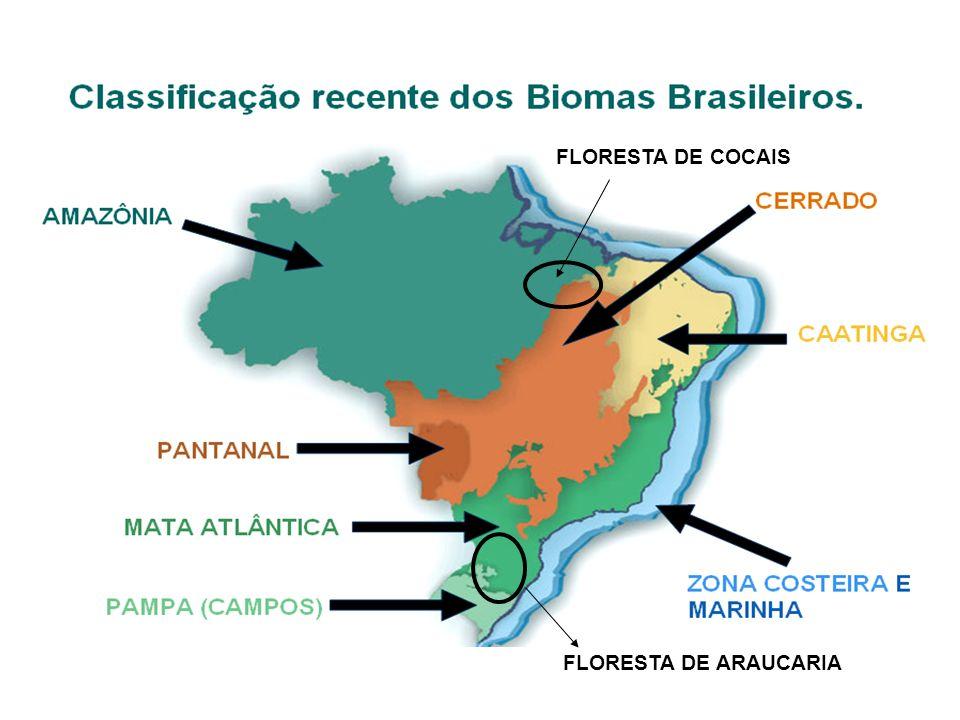 FLORESTA DE COCAIS FLORESTA DE ARAUCARIA