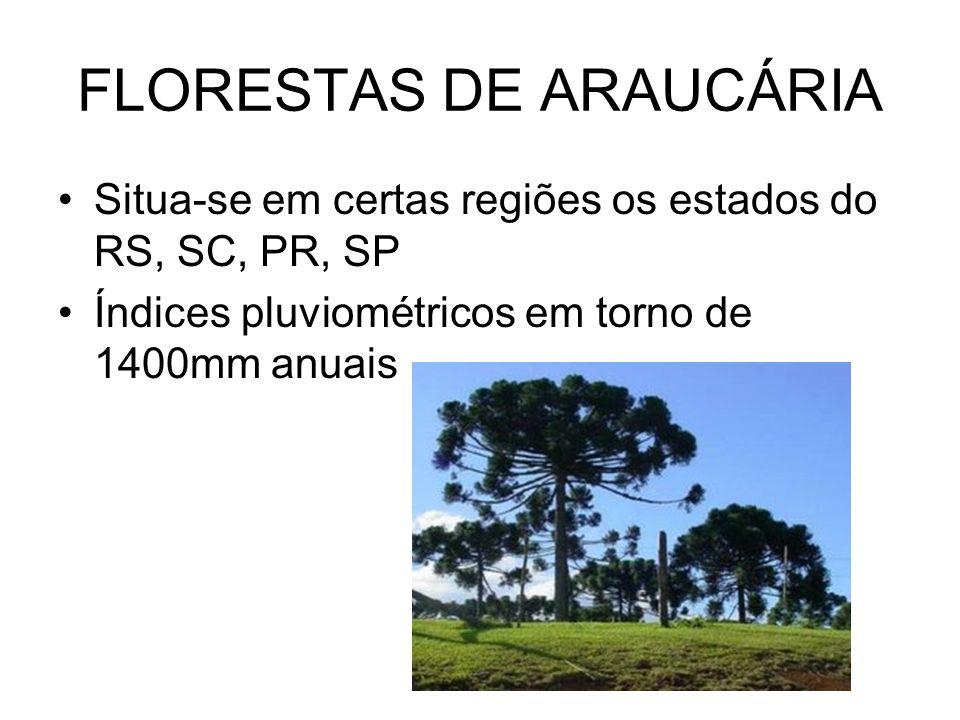 FLORESTAS DE ARAUCÁRIA