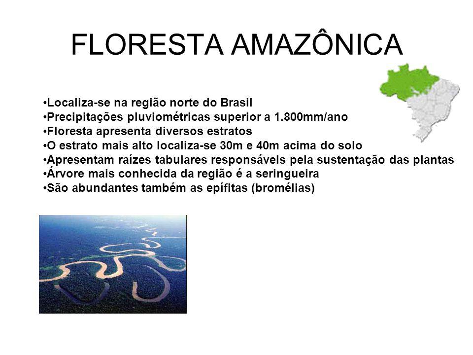 FLORESTA AMAZÔNICA Localiza-se na região norte do Brasil