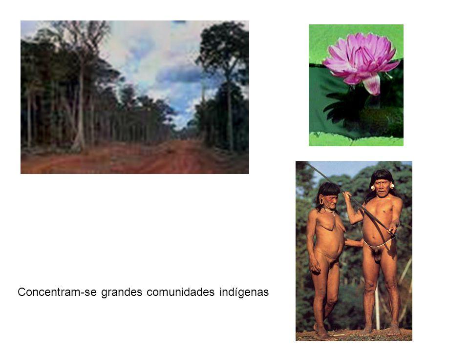 Concentram-se grandes comunidades indígenas