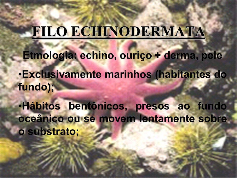 Etmologia: echino, ouriço + derma, pele