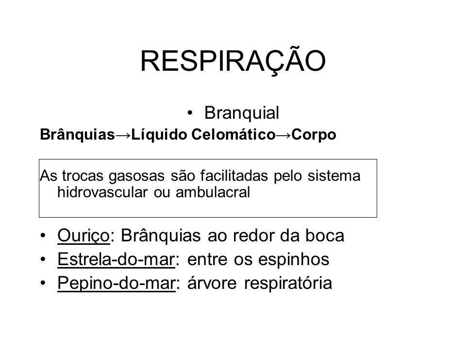 RESPIRAÇÃO Branquial Ouriço: Brânquias ao redor da boca