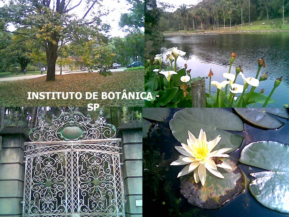 INSTITUTO DE BOTÂNICA - SP
