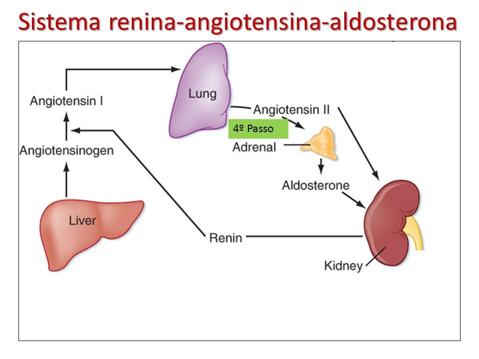 esteroidogenesis periferica