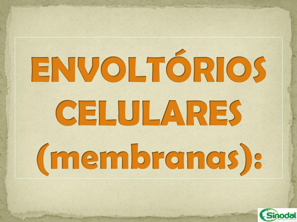 ENVOLTÓRIOS CELULARES (membranas):