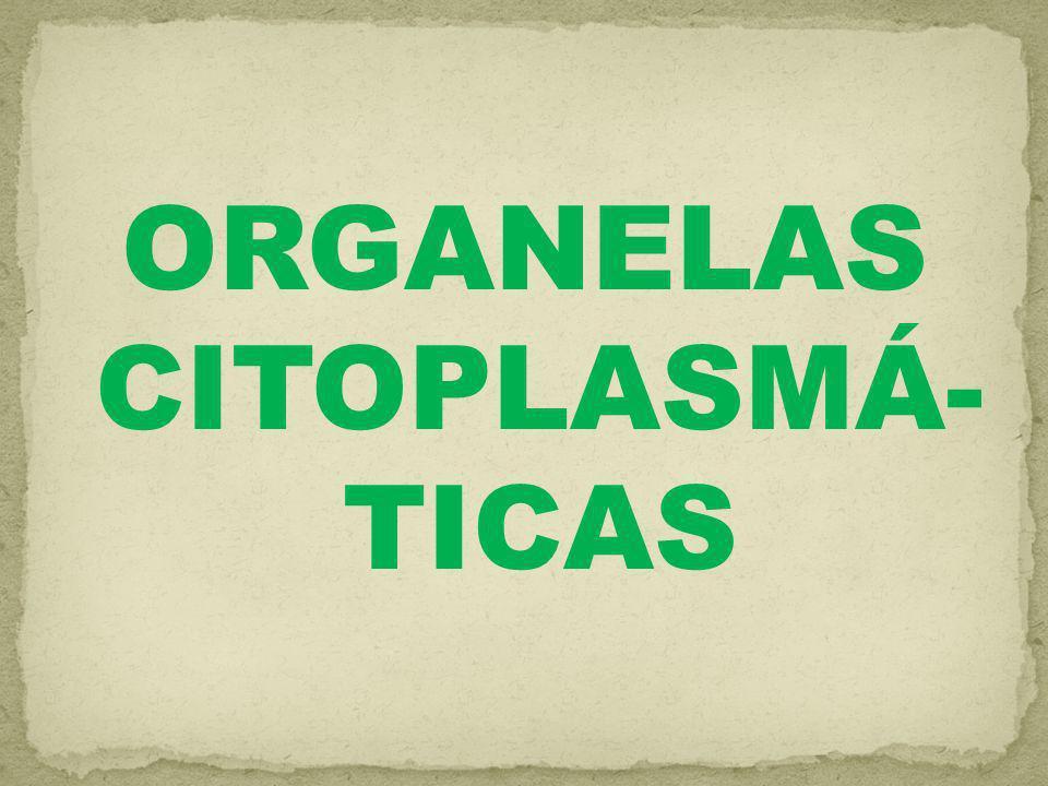 ORGANELAS CITOPLASMÁ- TICAS