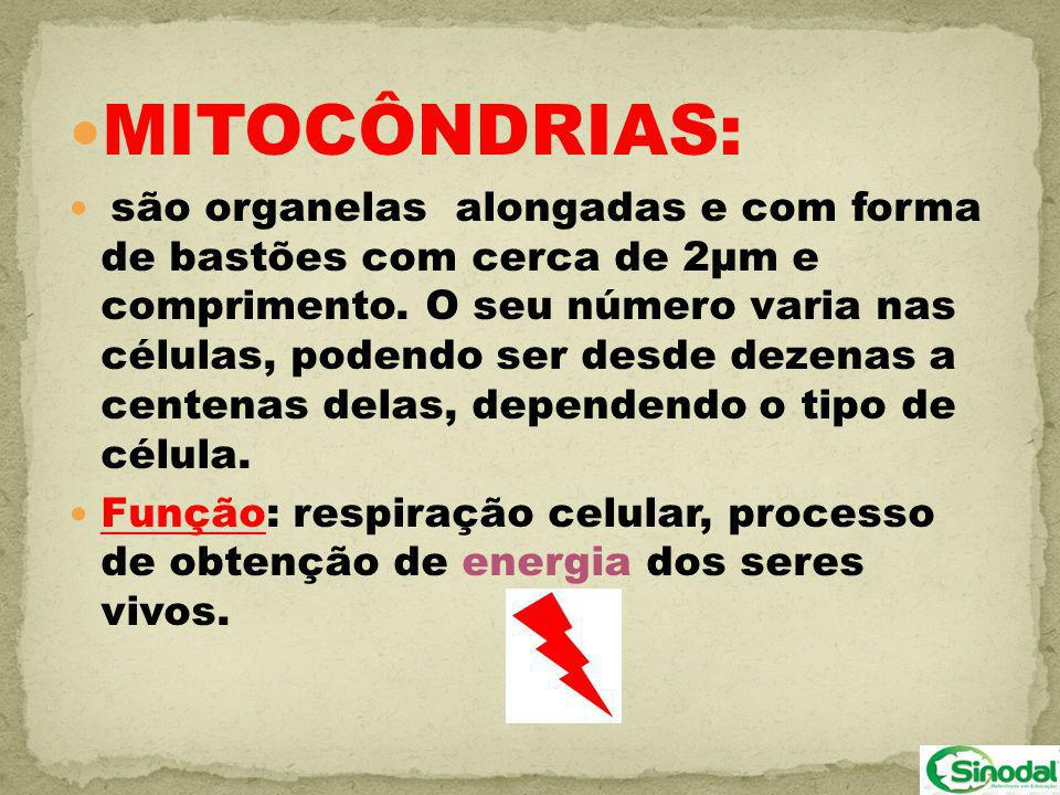 MITOCÔNDRIAS: