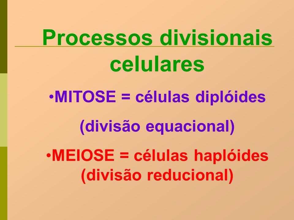 Processos divisionais celulares