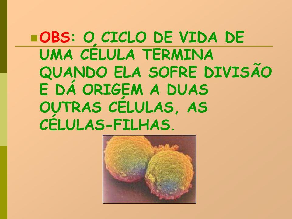 OBS: O CICLO DE VIDA DE UMA CÉLULA TERMINA QUANDO ELA SOFRE DIVISÃO E DÁ ORIGEM A DUAS OUTRAS CÉLULAS, AS CÉLULAS-FILHAS.
