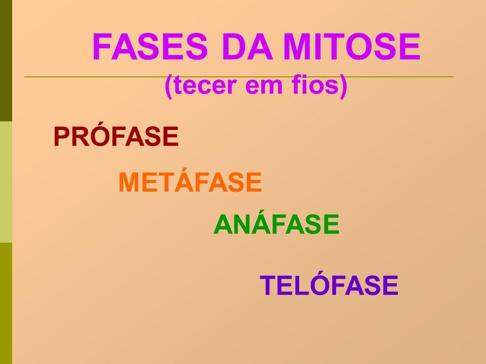 FASES DA MITOSE (tecer em fios)