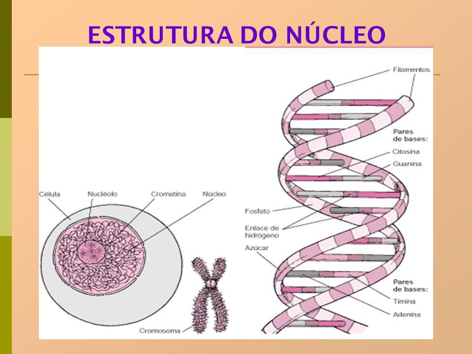 ESTRUTURA DO NÚCLEO