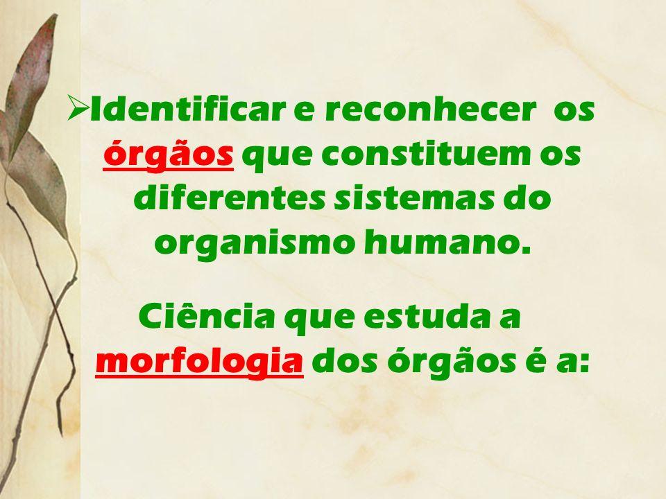 Ciência que estuda a morfologia dos órgãos é a: