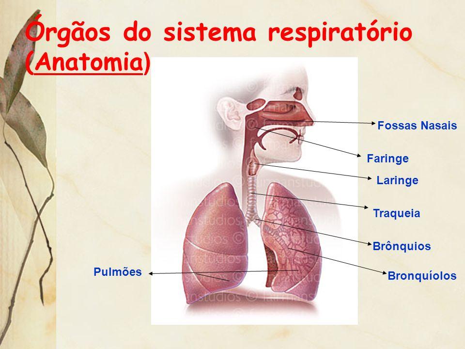 Órgãos do sistema respiratório (Anatomia)