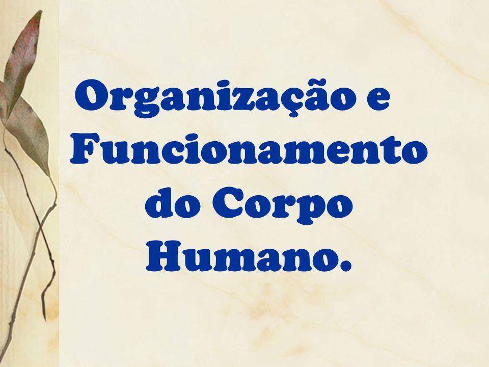 Organização e Funcionamento do Corpo Humano.