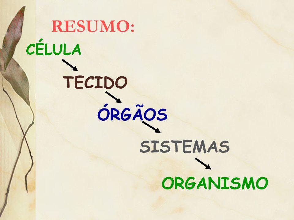 RESUMO: CÉLULA TECIDO ÓRGÃOS SISTEMAS ORGANISMO