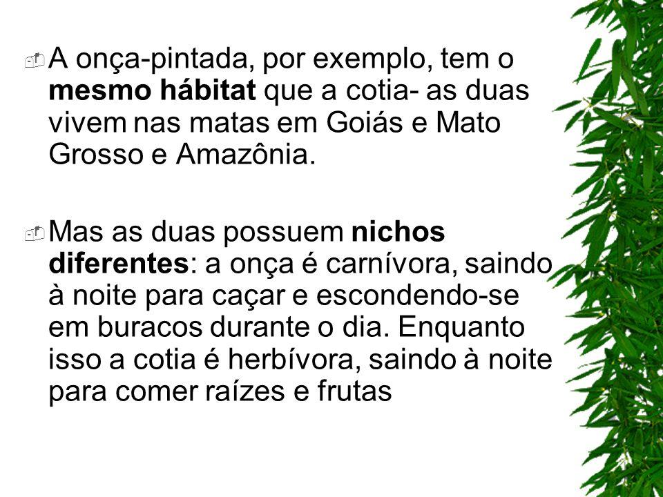 A onça-pintada, por exemplo, tem o mesmo hábitat que a cotia- as duas vivem nas matas em Goiás e Mato Grosso e Amazônia.