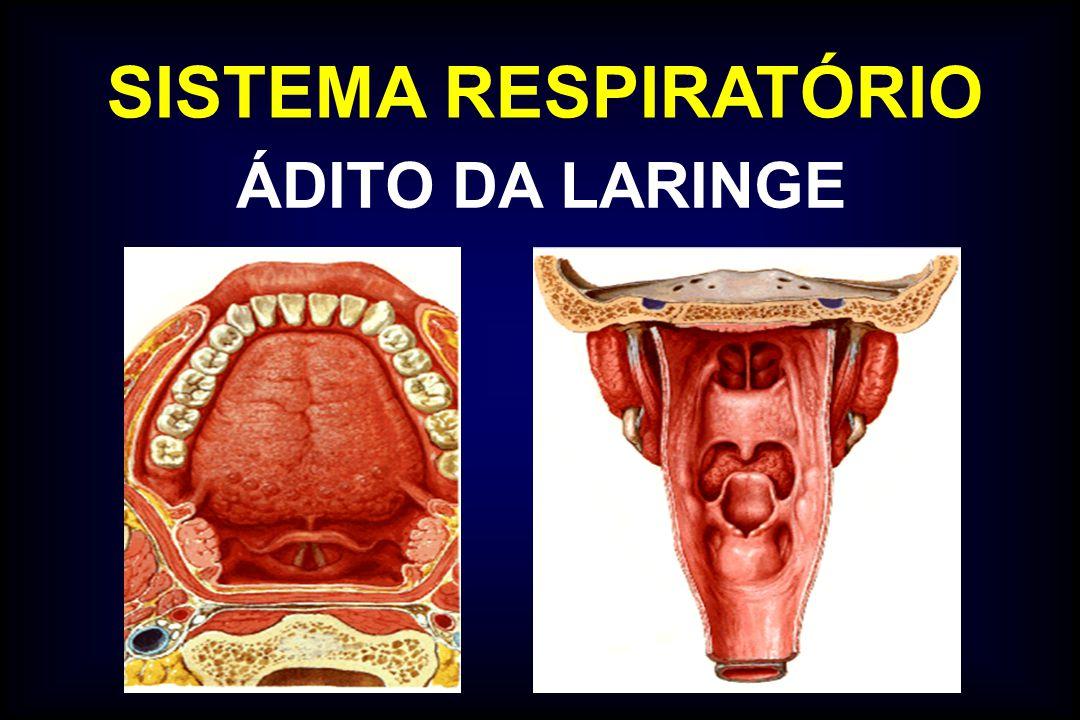 Encantador Ct Laringe Anatomía Modelo - Imágenes de Anatomía Humana ...