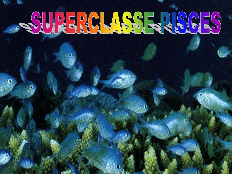SUPERCLASSE PISCES