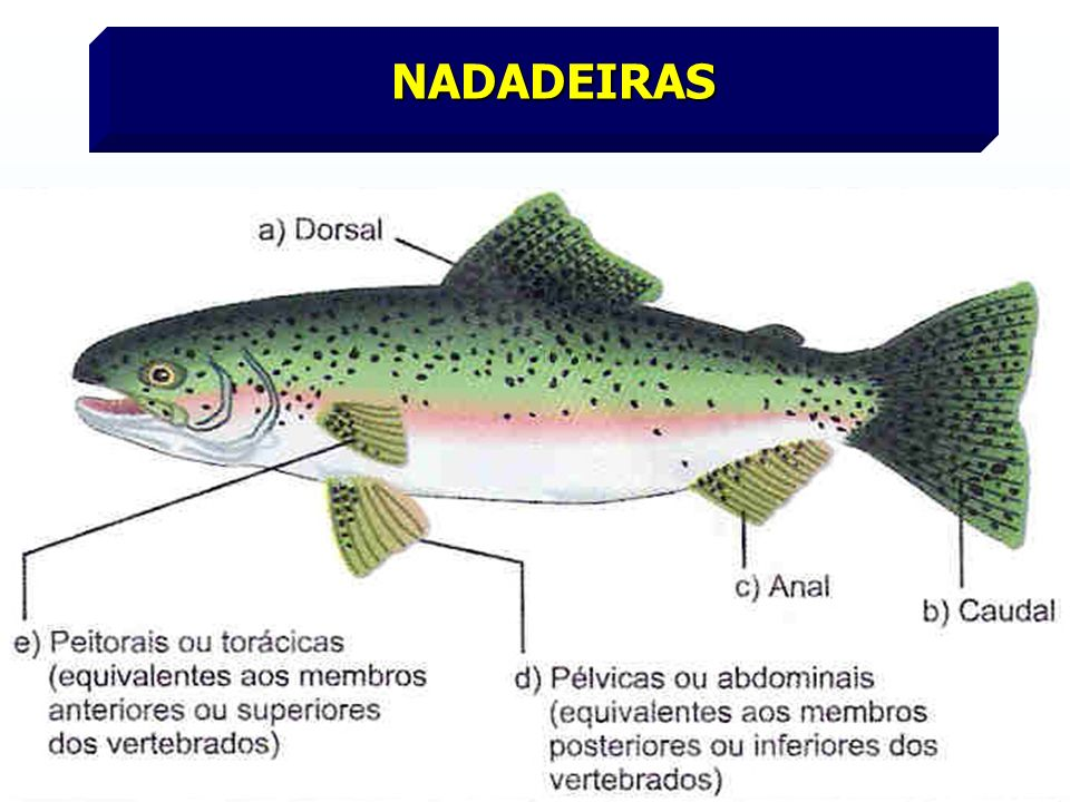 NADADEIRAS