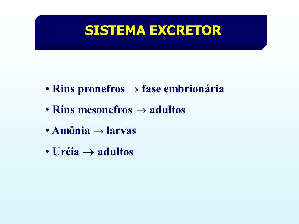 SISTEMA EXCRETOR Rins pronefros  fase embrionária