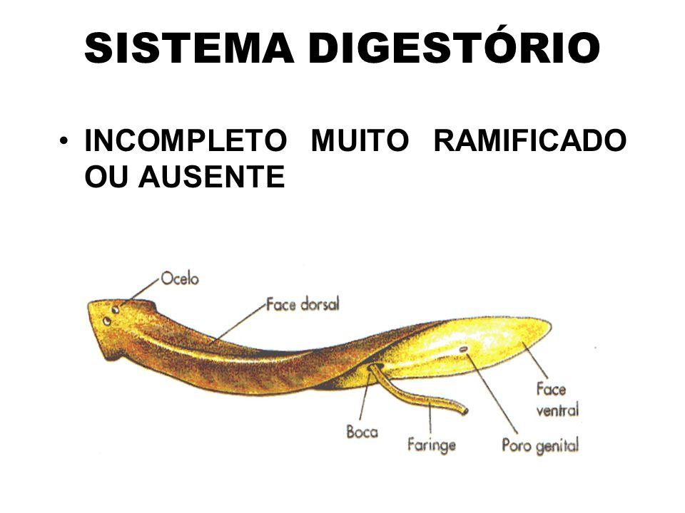 SISTEMA DIGESTÓRIO INCOMPLETO MUITO RAMIFICADO OU AUSENTE