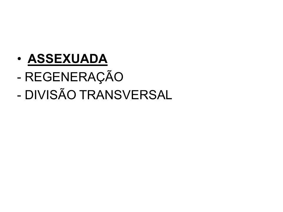 ASSEXUADA - REGENERAÇÃO - DIVISÃO TRANSVERSAL