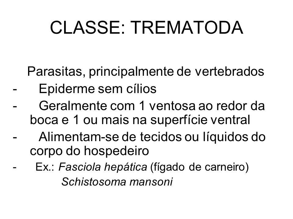 CLASSE: TREMATODA Parasitas, principalmente de vertebrados
