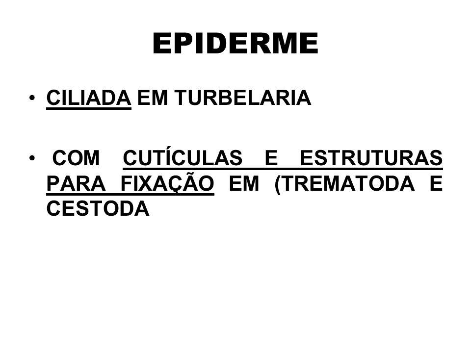 EPIDERME CILIADA EM TURBELARIA