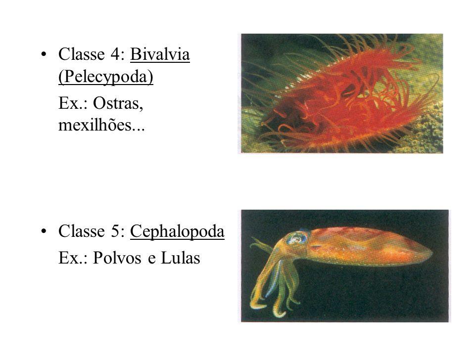 Classe 4: Bivalvia (Pelecypoda)