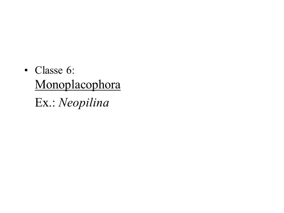 Classe 6: Monoplacophora