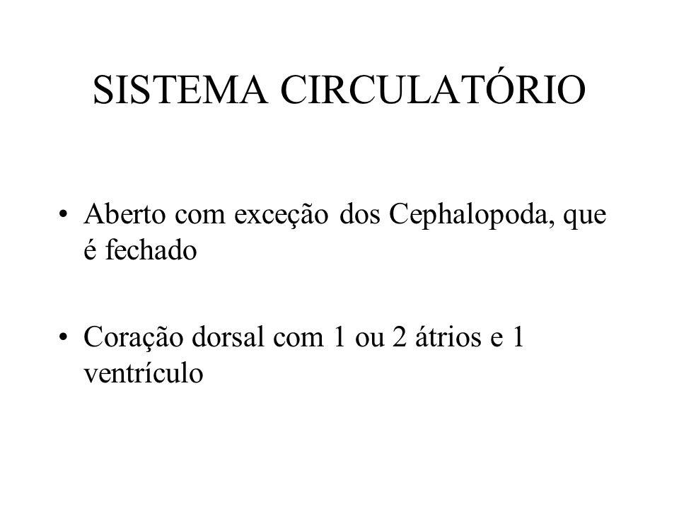 SISTEMA CIRCULATÓRIO Aberto com exceção dos Cephalopoda, que é fechado