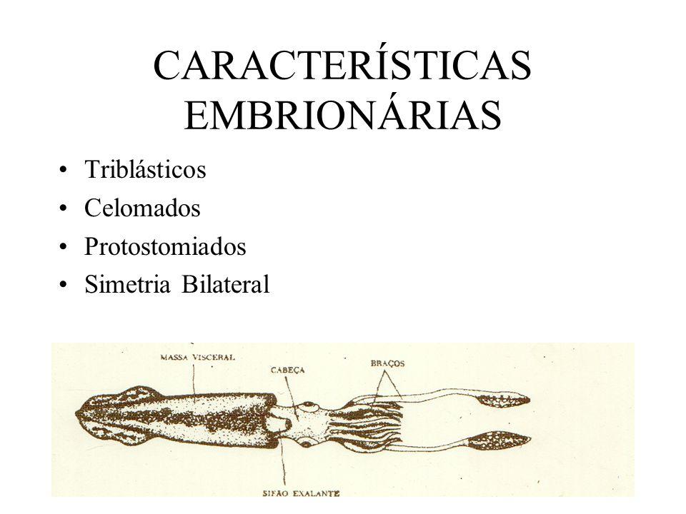 CARACTERÍSTICAS EMBRIONÁRIAS
